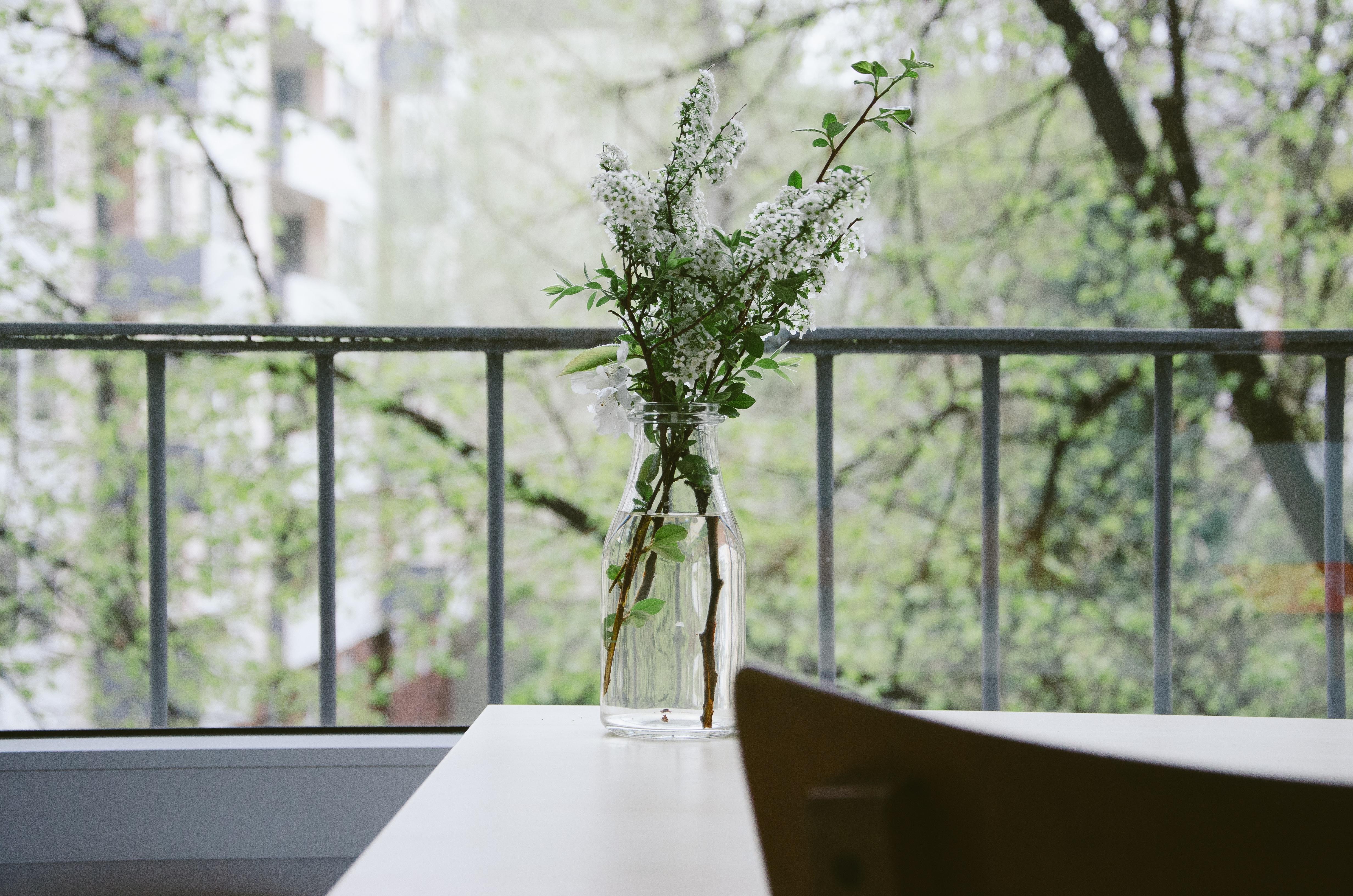 Les plantes dans la maison Feng Shui