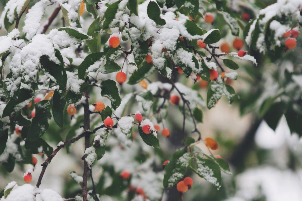 froid favorisant le rhume, soigné avec des huiles essentielles