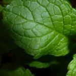 Huile essentielle de menthe poivrée: bienfaits et utilisation